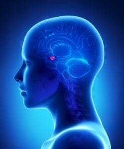 Nytårsforsæt og hjernen