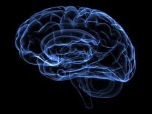 Oveskud og hjernen